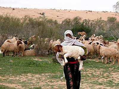 Shepherd-in-Israel