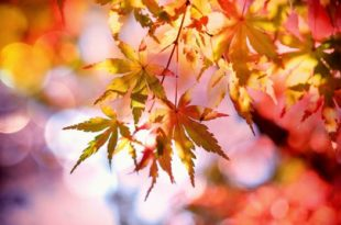 pexels-photo-355302